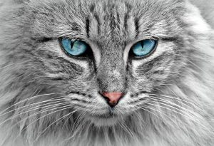 Pretty cat face