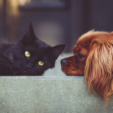 Great Dog & Cat Products
